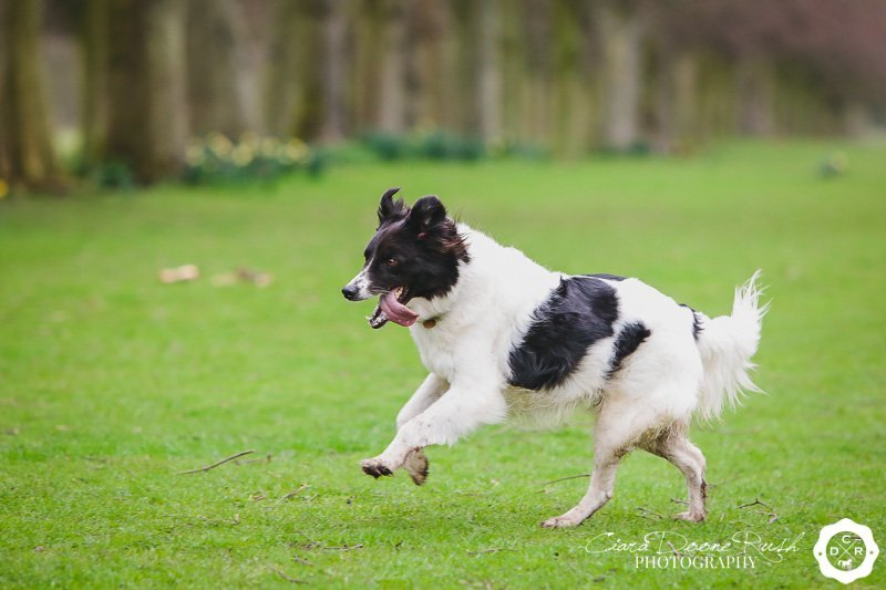 Dog running in Marbury park