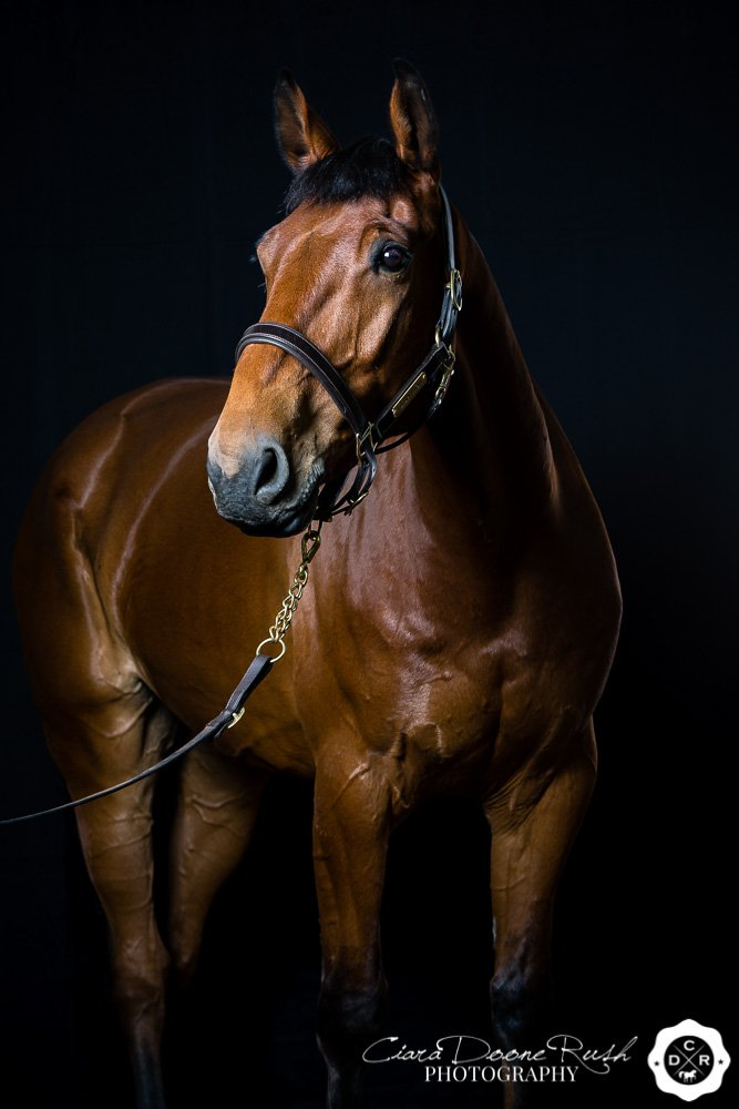 Horse Studio Photo Shoot