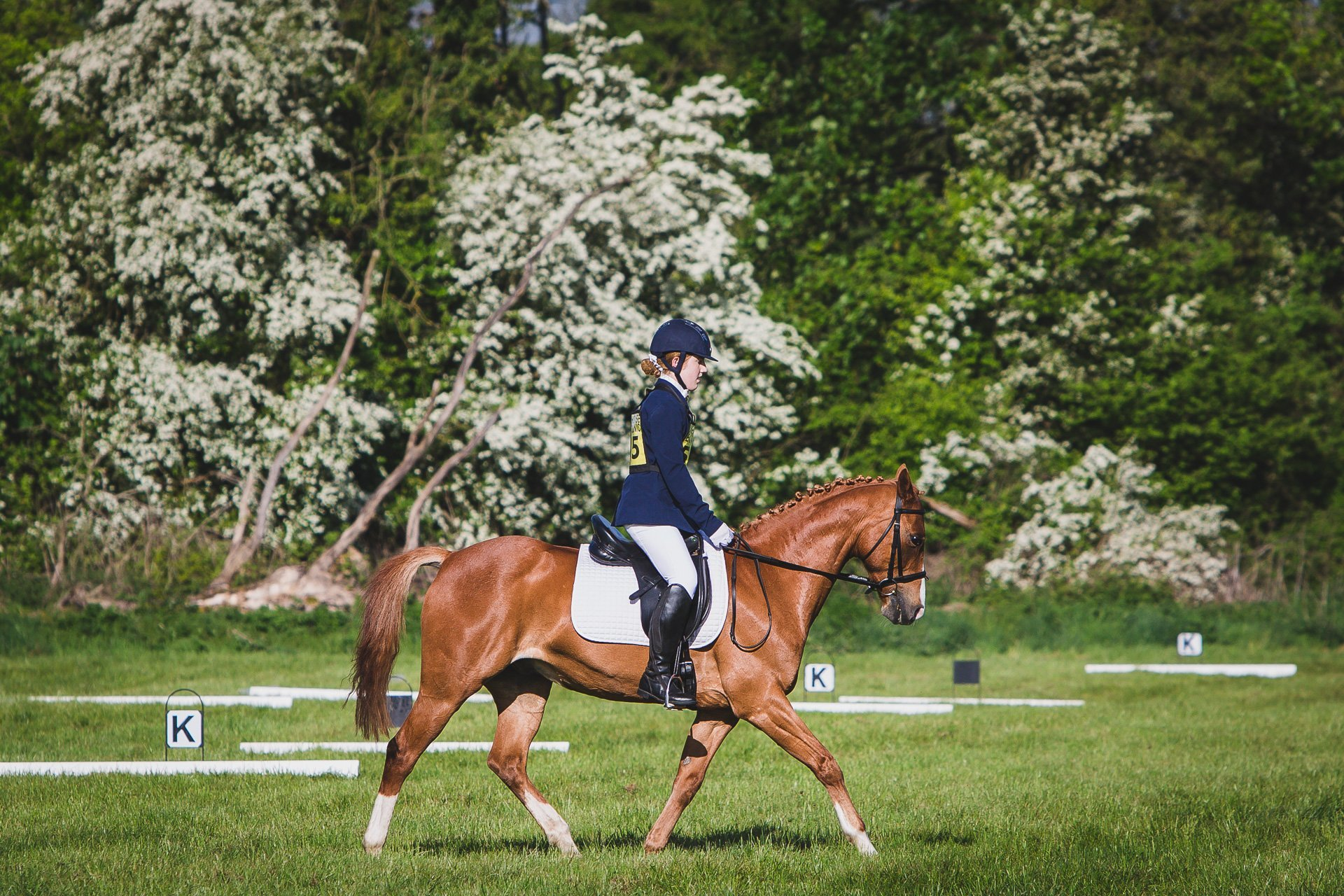 Llanymynech horse trials dressage