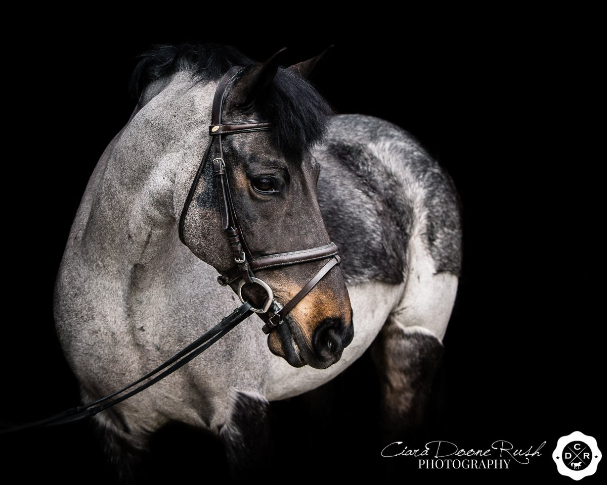 pony portrait on a black background