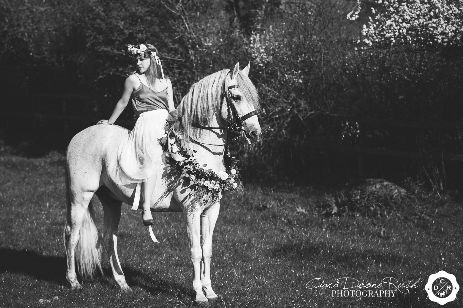 a creative horse and rider shoot