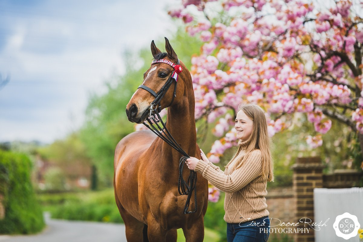 horses and spring blossom