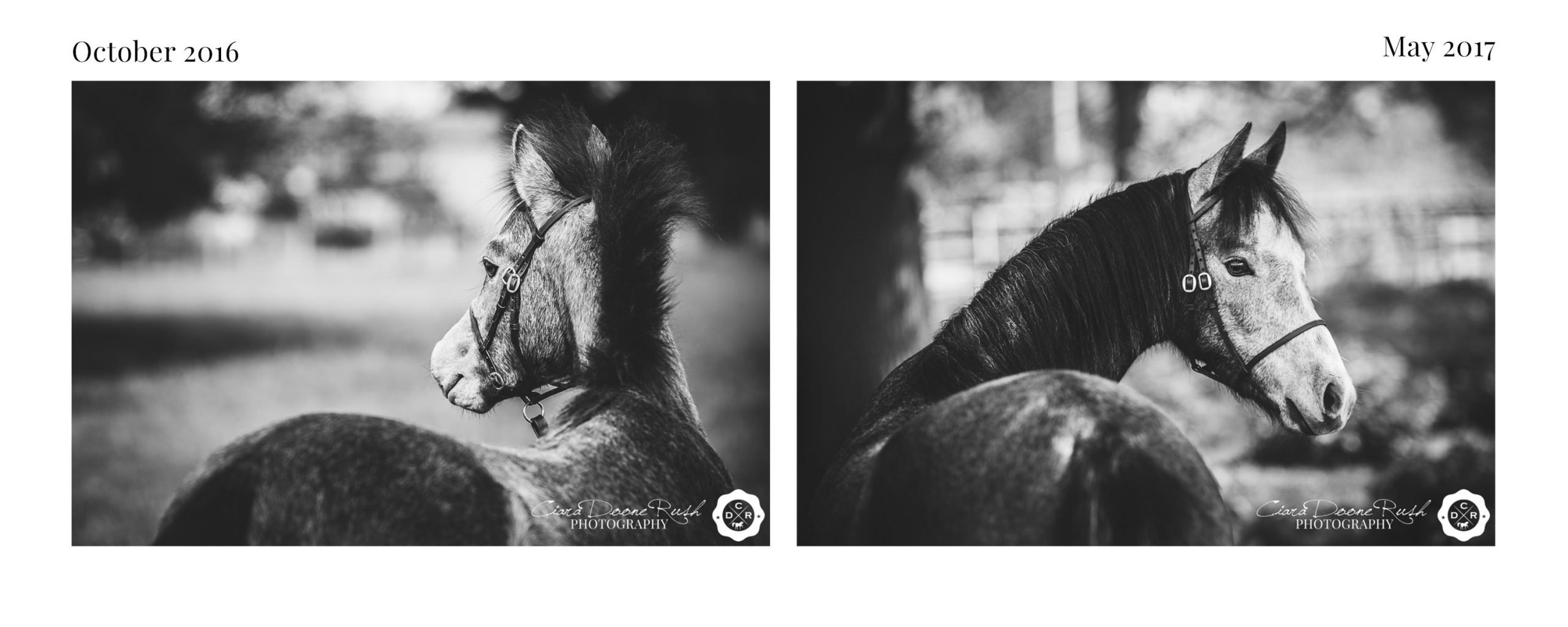 Becky & Sulwyn // A Mini Shoot Series
