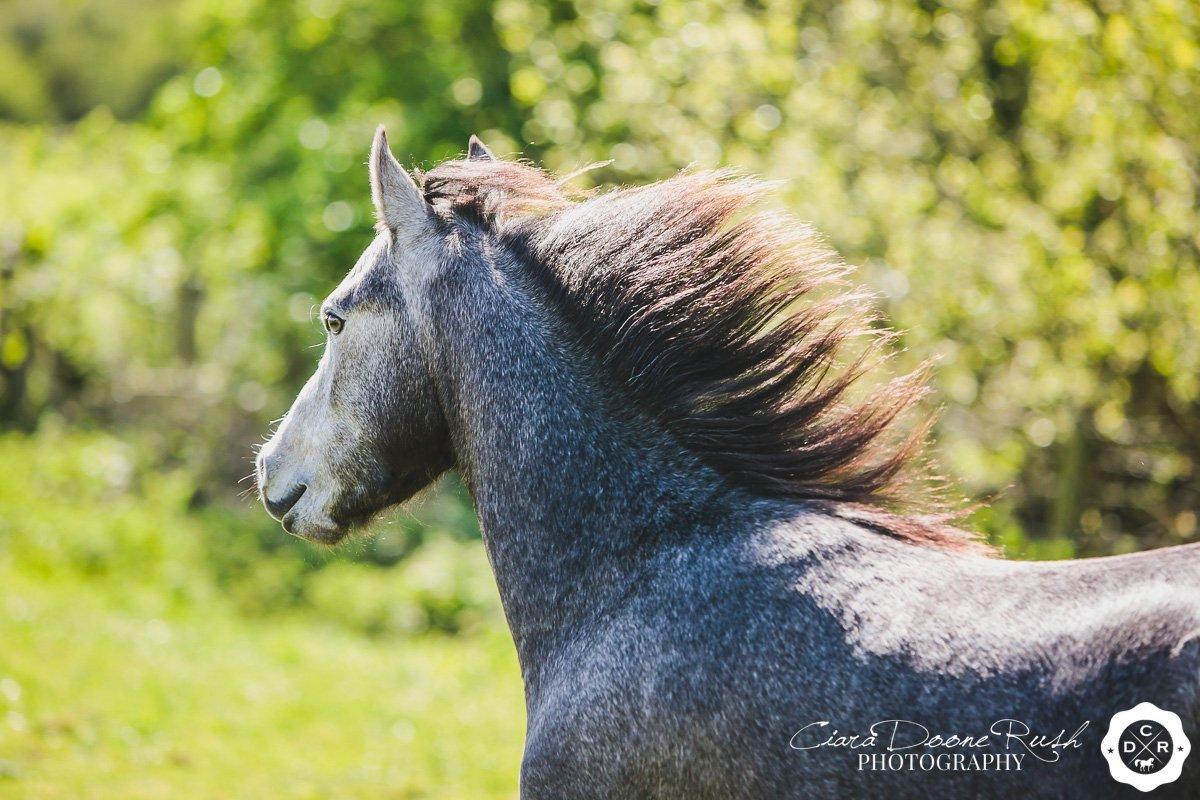 Horse & Rider Mini Shoot Series