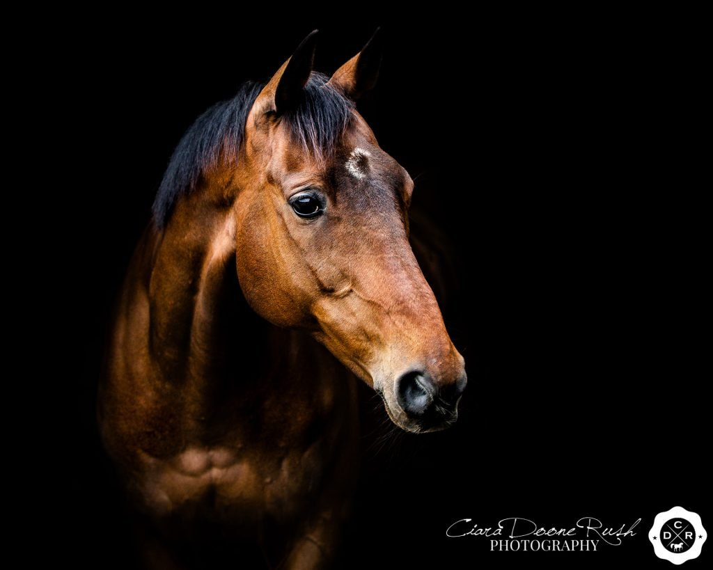 ex racehorse photo shoot