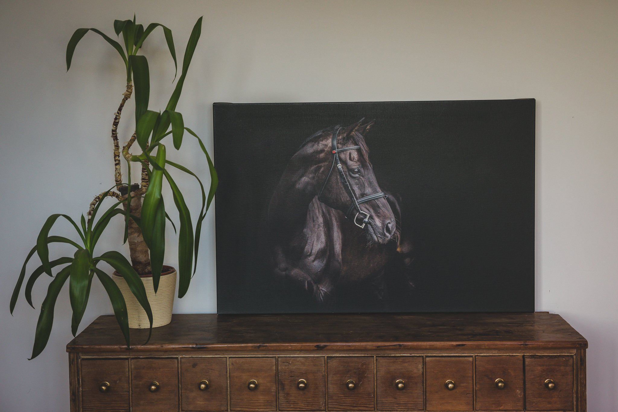 photo of a canvas print of a horse