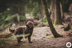 a dog on a photo shoot in Delamere Forest