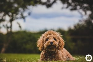 puppy photo shoot