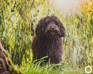 a dog in a willow tree on a photo shoot