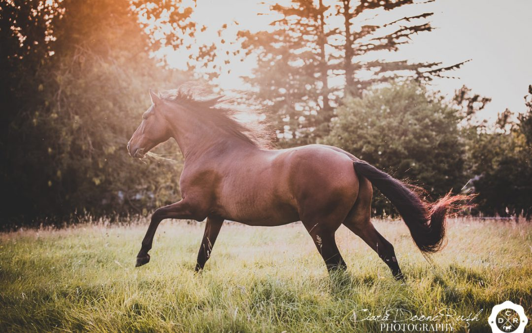 2020 // Best of: Horse & Dog At Liberty Photo Shoots