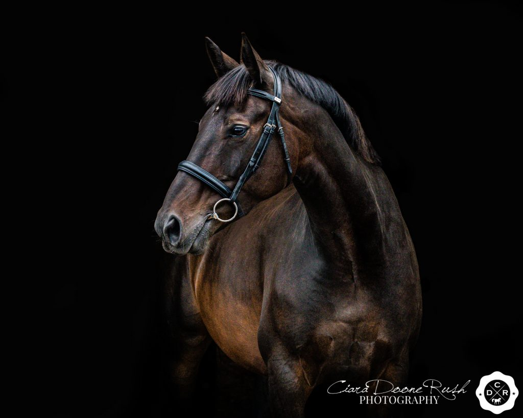 a black background photo of a horse