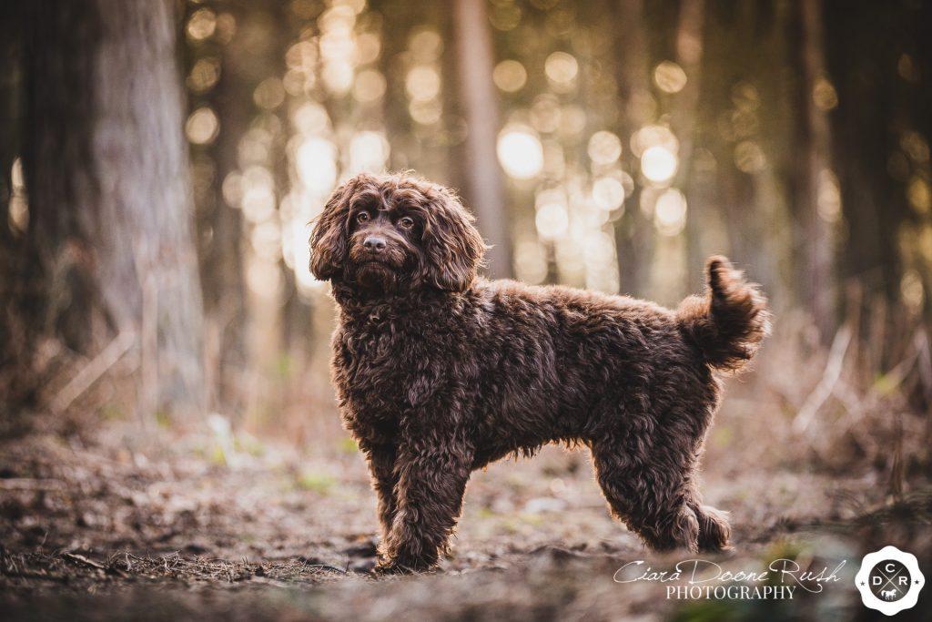 dog photo shoot Delamere forest